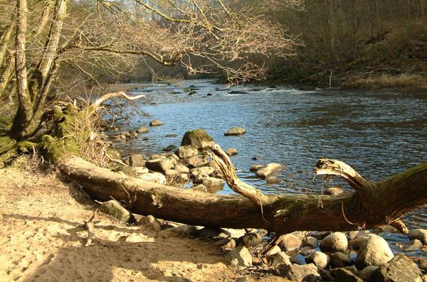 The river Ure at Hackfall